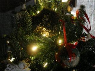 Time for Video/Photos No/Few Words: Jingle Dogs Reunion & Secret Places & etc