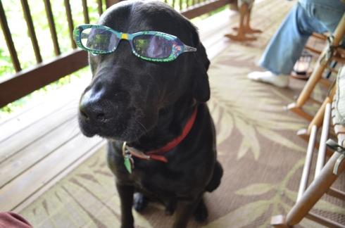 Professor Dawg